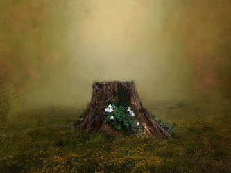 Tree stump background by Jeni-Sue