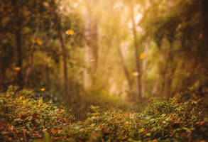 Autumn Begins by Jeni-Sue