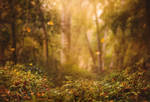 Autumn Begins