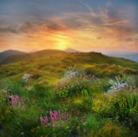 Peaceful Meadow Background