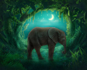 Sleeping Baby elephant premade