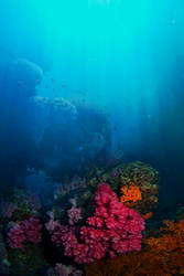 Coral Background