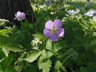 Woodland flower by CFStudios