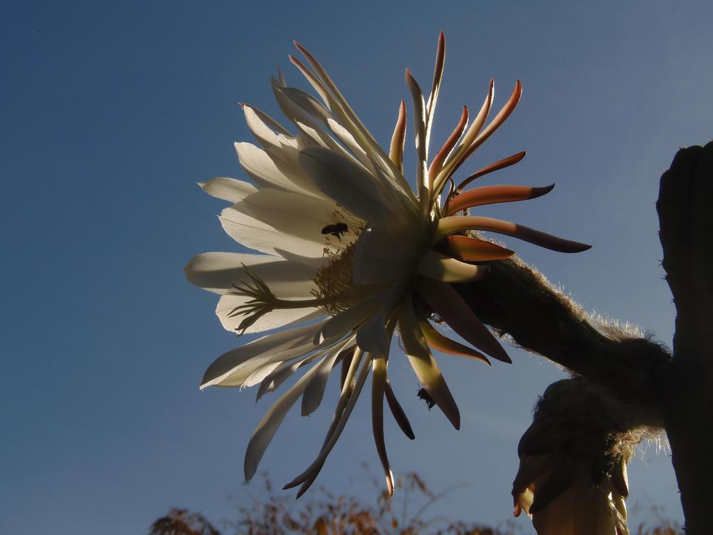 Cactus Bloom with bee by CFStudios