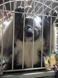 Funny snoozing koala by Jokerfan79