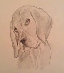Beagle puppy sketch. by Jokerfan79
