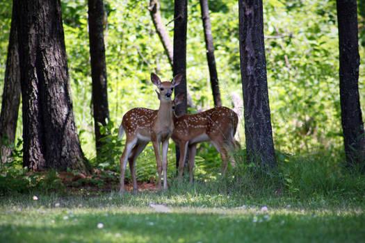 .deer.
