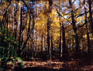 Fall Double-Exposure