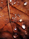 .autumn.