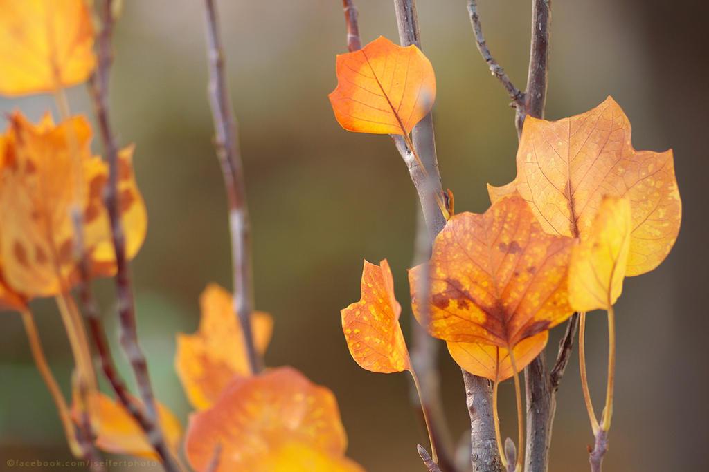 Autumn Life III by thestargazer23