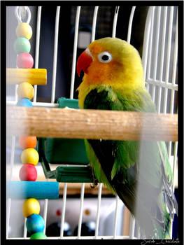 A parrot.