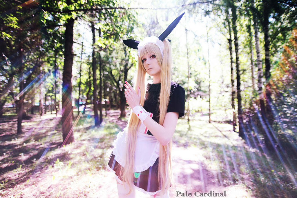 Rachel Alucard cosplay by palecardinal
