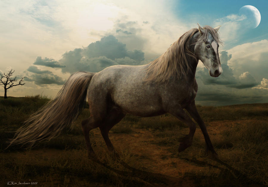 Lone Stallion by taasia