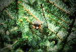 Garden Orb-Weaving Spider by NigelAndreola