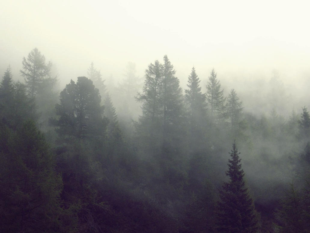 Forests and fog by MorgueCaroObitorio