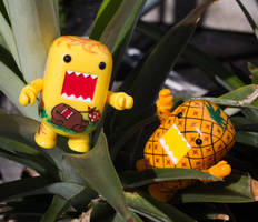 Pineapple garden!