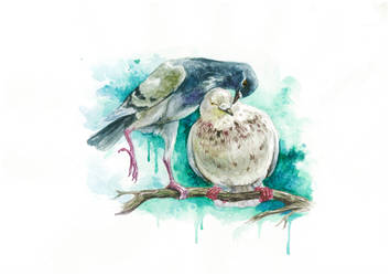 Pigeons by Egretink
