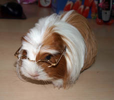 Nearsighted Guinea Pig Crystal