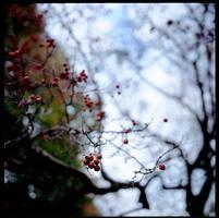 rowan by M0rt