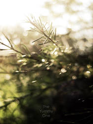 bright by TheYummyOne