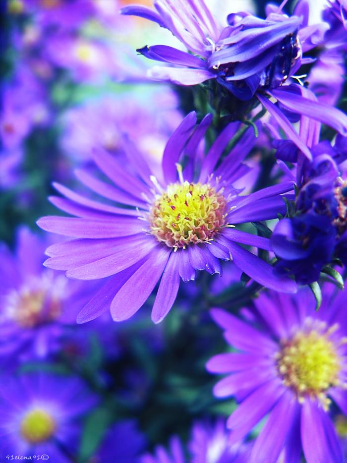 Violet... by 91Elena91