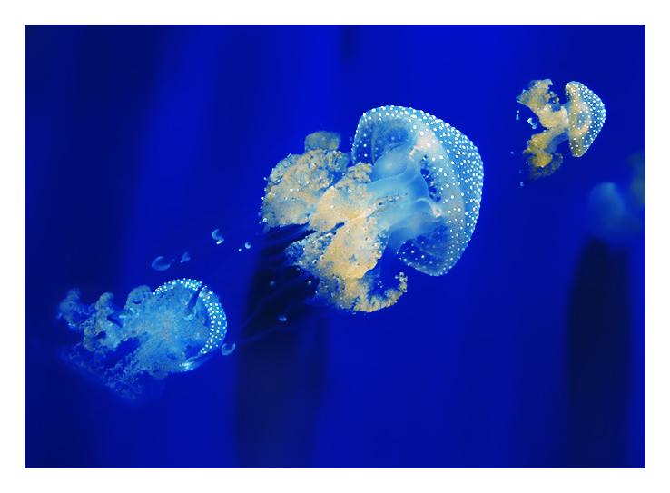 JellyFish II by 91Elena91