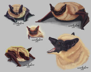 Canyon Bats Study by larissa-the-hanyou