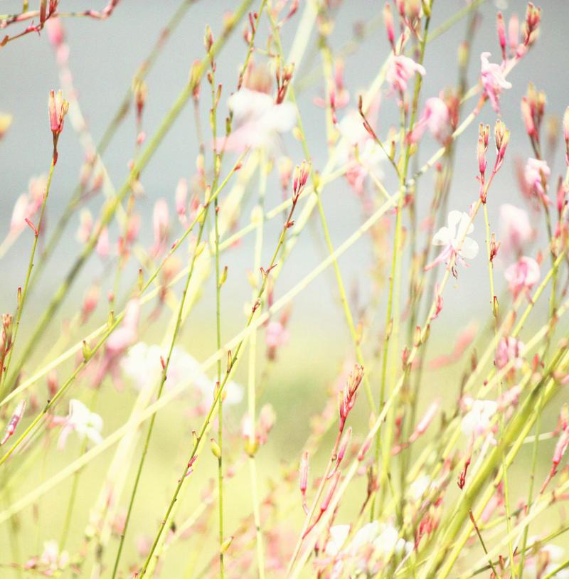Spring by Maeyliin