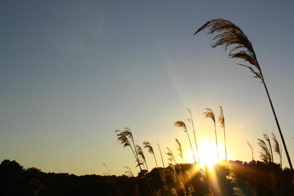 Summer by Maeyliin
