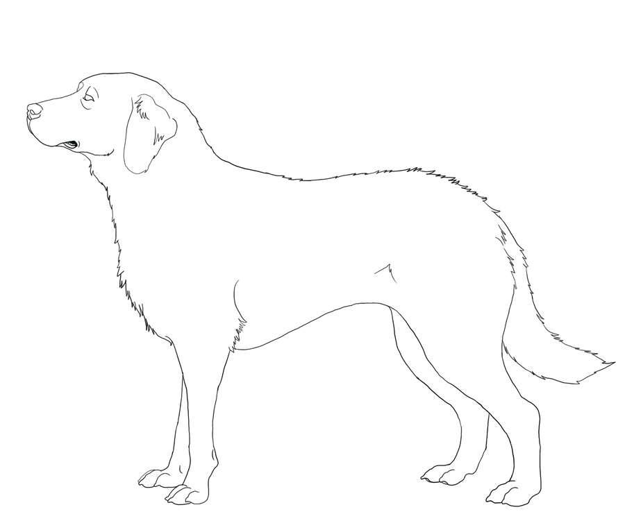 Chesapeake Bay Retriever Line-Art by DoggieDoodles on ...