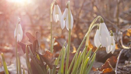 beauty in spring morning by feniksas4