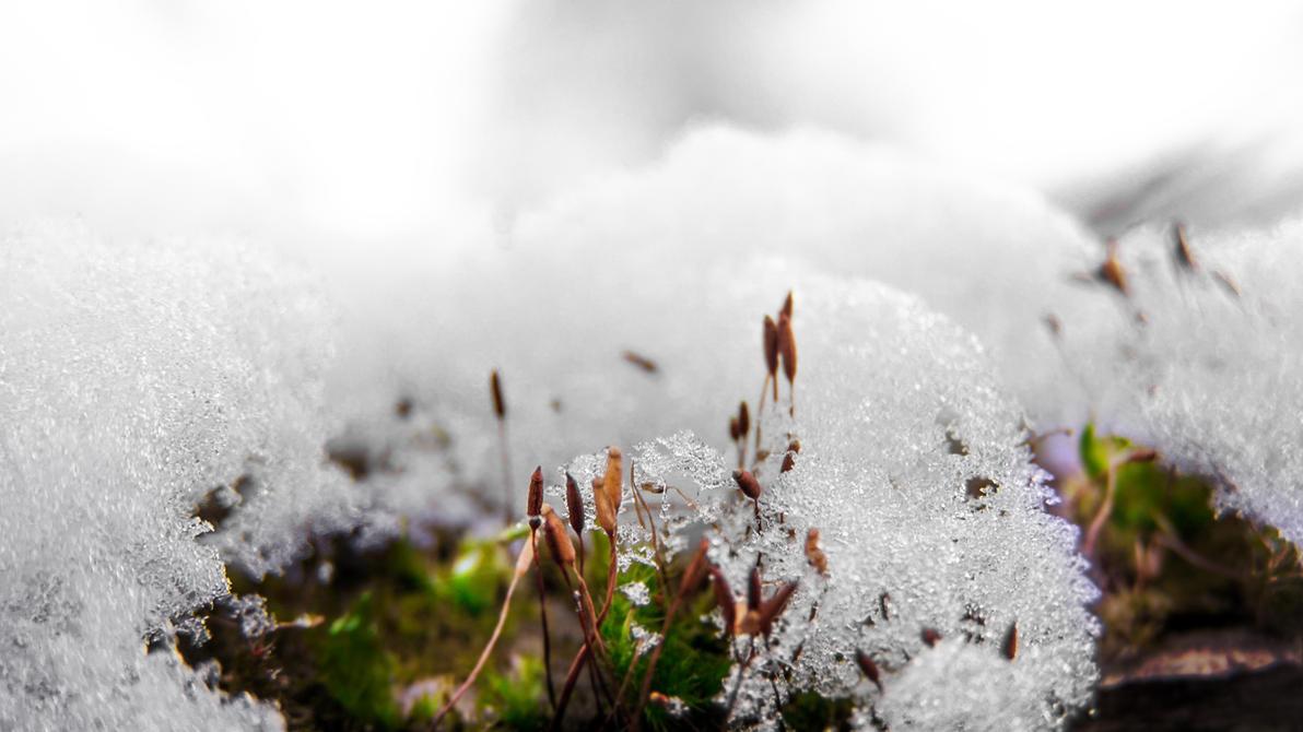life in winter by feniksas4
