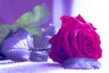 beautyfull day flower