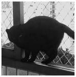 Mies the Cat by oisinnoir