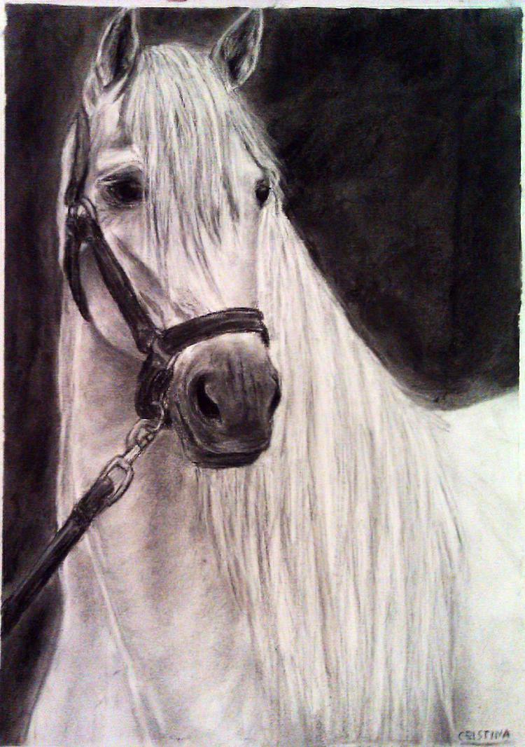 caballo blanco andaluz by Burbujitafdejabon
