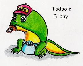 Tadpole Slippy Toad by Mad-But-Happy