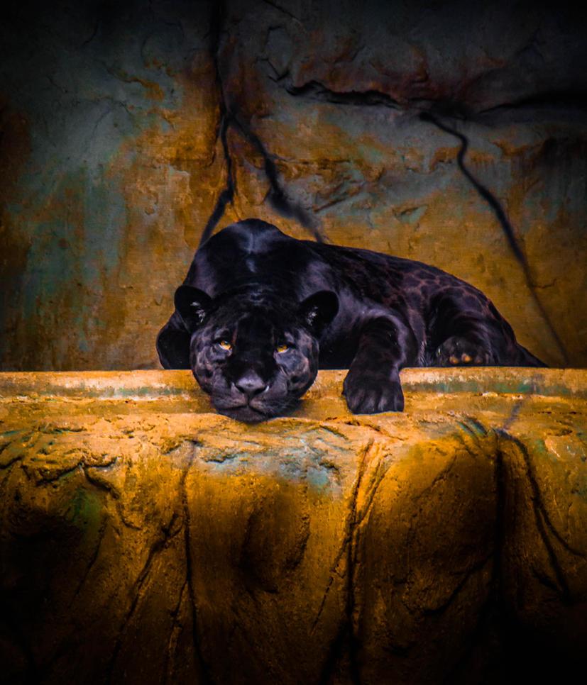 Black Jaguar by ART-JL