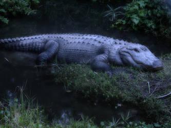 Alligator by ayaseXD
