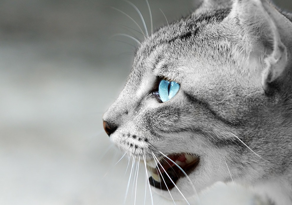 Snowfur by Blueranyk