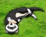 Gift: Ferret in Grass