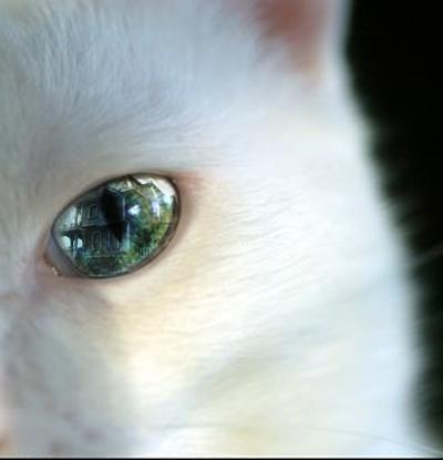 Cat's Eye by Fennic