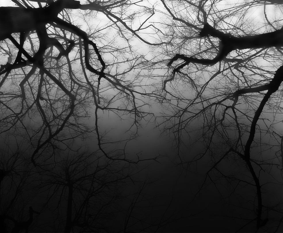 Dark Branches by Not-Morgan-Freeman
