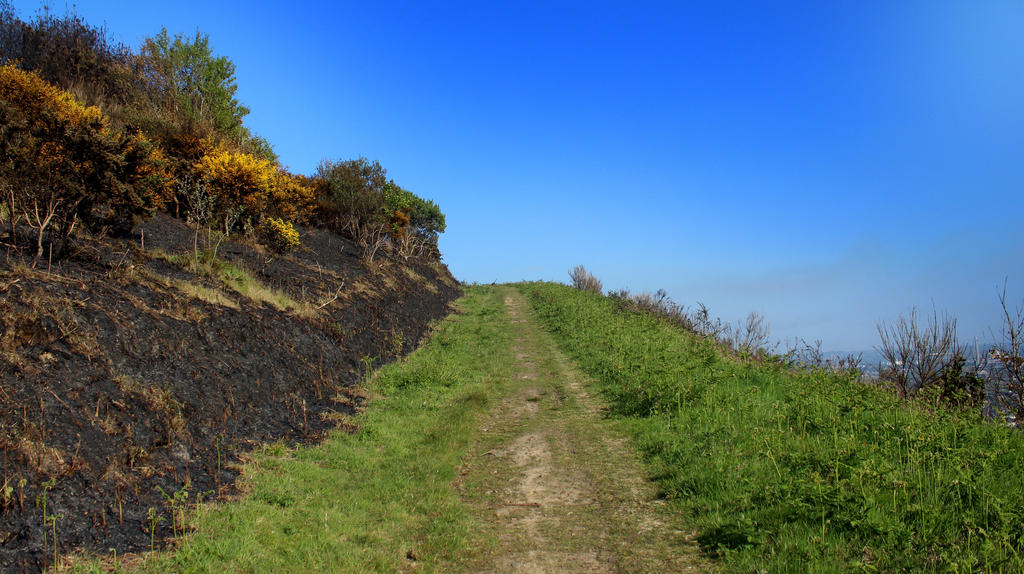 Scorched Paths by Not-Morgan-Freeman