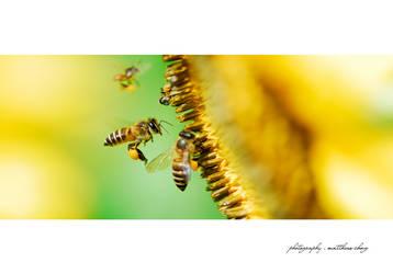 Pollenating Season by asianrabbit