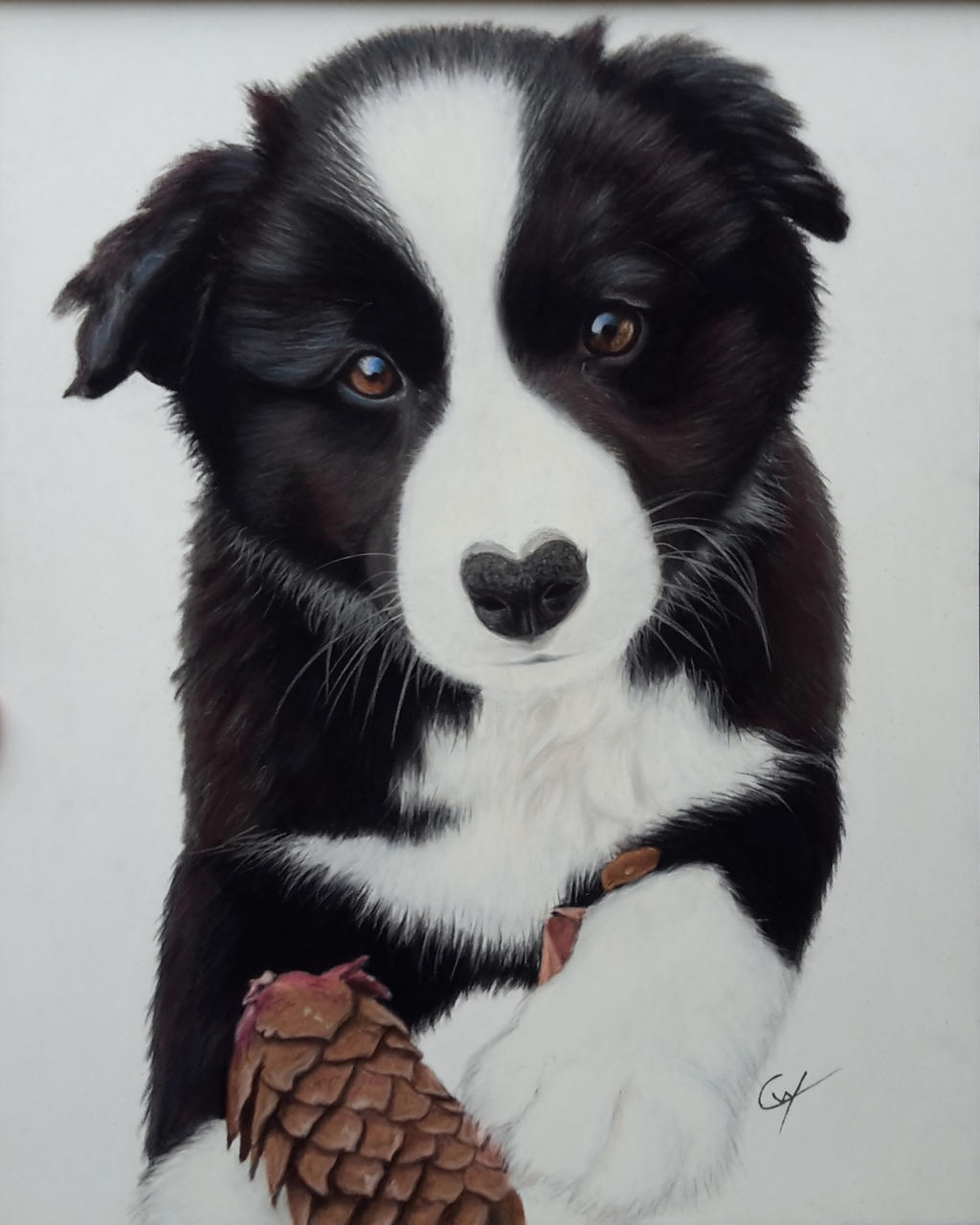 Chiot border collie by cynouille on DeviantArt