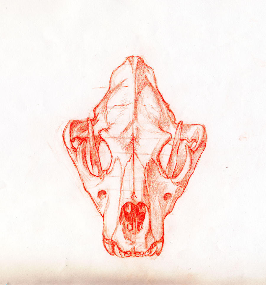 Wolf Skull Front Drawi...