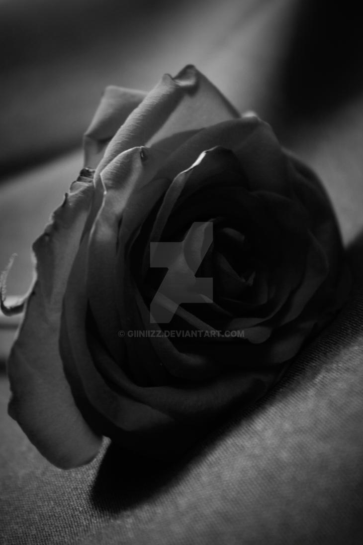 Rosa Blanco Y Negro By Giiniizz On Deviantart