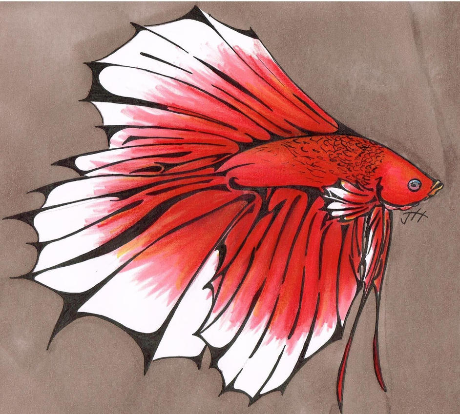 King crowntail betta