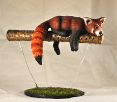 Red Panda by ApostacyArt