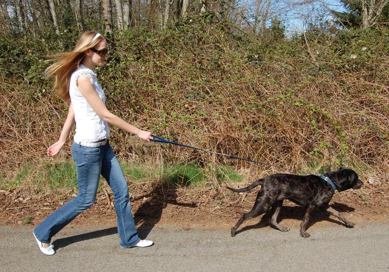 The Dog Walker 1 by intergalacticstock